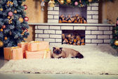Cat lying on fireplace — Stock Photo