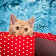 Cute kitten look out of the red gift box — Stock Photo #59958941