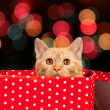 Cute kitten look out of the red gift box — Stock Photo #59958959