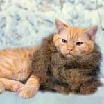 Cat wearing fur scarf — Stock Photo #59959007