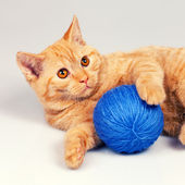 Cute kitten with clew — Stock Photo
