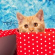 Cute kitten look out of the red gift box — Stock Photo #60215355