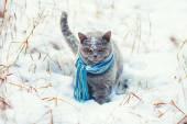 Kočka nosit šátek — Stock fotografie
