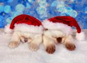 Little cats wearing Santa's hat — Stock Photo