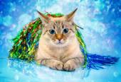 Christmas holiday cat — Stock Photo