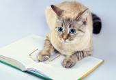 Wise cat with book — Stock Photo