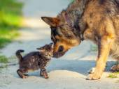 Dog and kitten on pathway — 图库照片