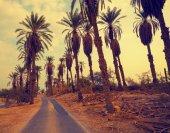 Palm trees plantation — Stock Photo