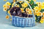 Kitten sitting in basket — Stockfoto