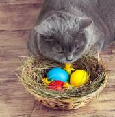 Cat with colored eggs — Stock Photo