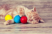 Kitten with colored eggs — Stock Photo