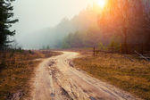 Autumn foggy road — Stock Photo