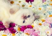Kitten on the flowers — Stock Photo