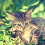 Cute kitten on lawn — Stock Photo #71599041