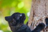 Lindo gatito negro — Foto de Stock