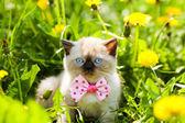 Cute kitten wearing bow tie — Stock Photo