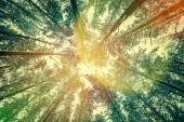 Sun shining in the sky with treetops — Stock Photo