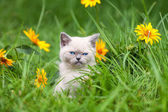 Cute kitten on flower lawn — Stock Photo