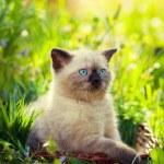 Kitten on the green lawn — Stock Photo #73540379
