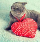 Cat with toy heart — Stock Photo