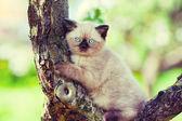 Kitten on a tree — Stock Photo