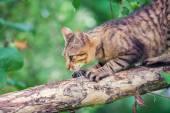 Cat on the tree — Stock Photo