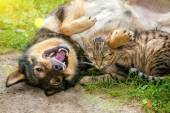 Dog and cat playing together — Stock Photo