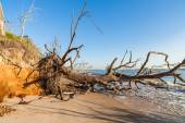 Beach erosion — Stock Photo