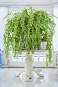Green fern in white pot on table, English country style — Photo