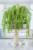 Green fern in white pot on table, English country style — Stockfoto