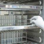 Scientist putting sample into incubator in laboratory — Stock Photo #52700871
