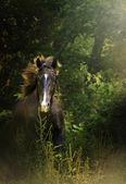 Beautiful quarter horse running in nature — Stock Photo