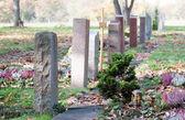 Quiet woodland cemetery — Стоковое фото