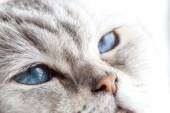 Sleepy blue eyes — Stock Photo