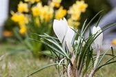 Spring fever — Stock Photo