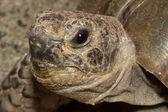 Turtle portrait — Stock Photo