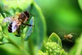 Bee and spider — Stock Photo