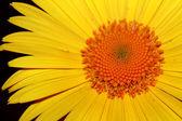黄色花 — 图库照片