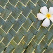 Plumerias on green coconut leafs — Stock Photo #70878829