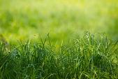 ボケ味の美しさと自然な草の背景 — ストック写真