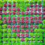 Tree planted heart shape in pots. — Stock Photo #52271993