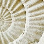 Ammonite prehistoric fossil — Stock Photo #52272395