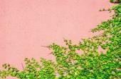 The Green Creeper Plant. — Stock Photo