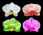 Many color beautiful orchid flowers set — Stock Photo
