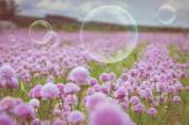 Flowering meadow and flying bubbles from bubble blower — Stock Photo
