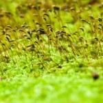 Macro shot of moss — Stock Photo #54613783