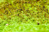 Macro shot of moss — Stock Photo