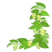 Branch of hops on white background — Stock Vector