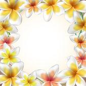 Frame from Frangipani flowers — Stock Vector