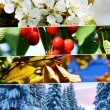 Four season collage - horizontal banners — Stock Photo #74160287